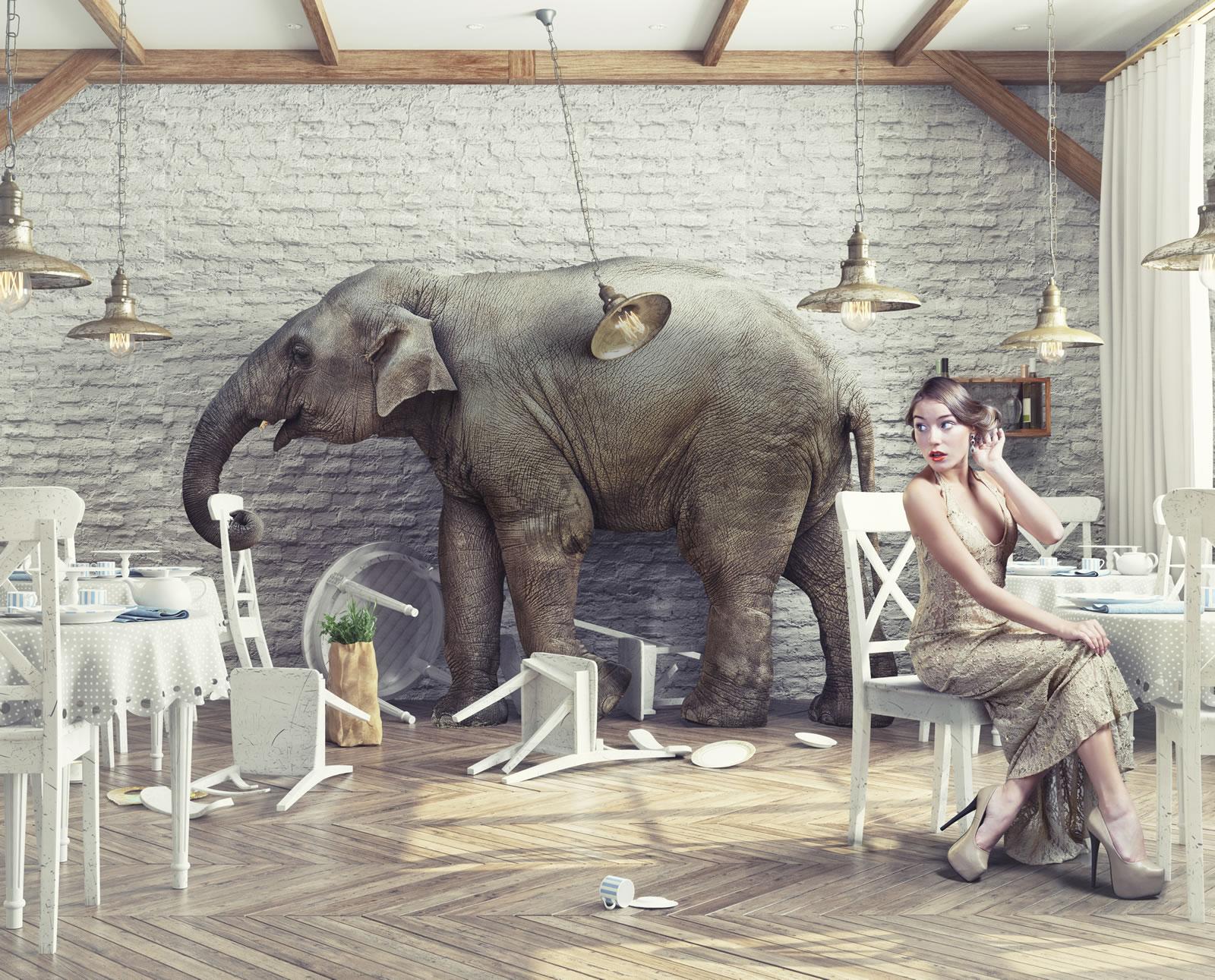 slider_elefant